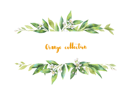 flowering: Watercolor banner fruit orange branch isolated on white background.