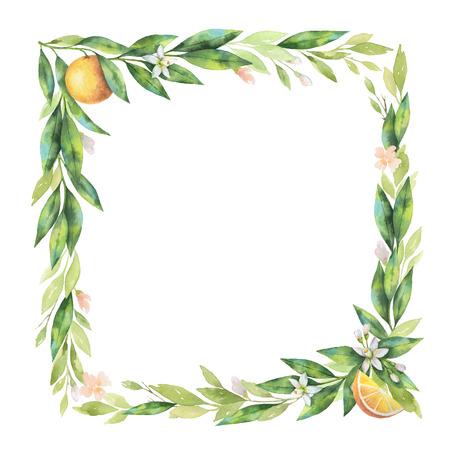 水彩の正方形のフレーム オレンジ果実の枝が白い背景で隔離。
