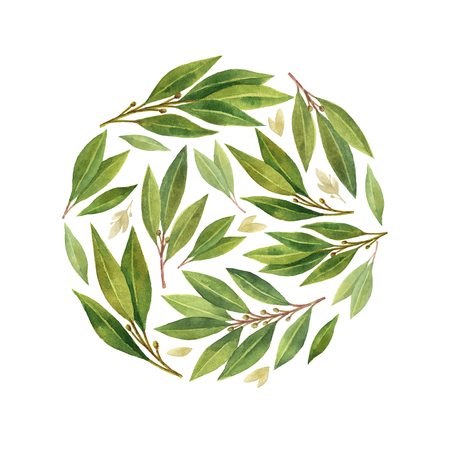 greenery: Watercolor Bay leaf isolated on white background. Stock Photo