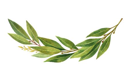 Waterverf Bay leaf krans geïsoleerd op een witte achtergrond. Stockfoto - 75980170