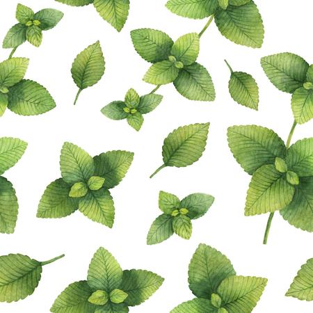 Hand drawn watercolor seamless pattern of Lemon balm.