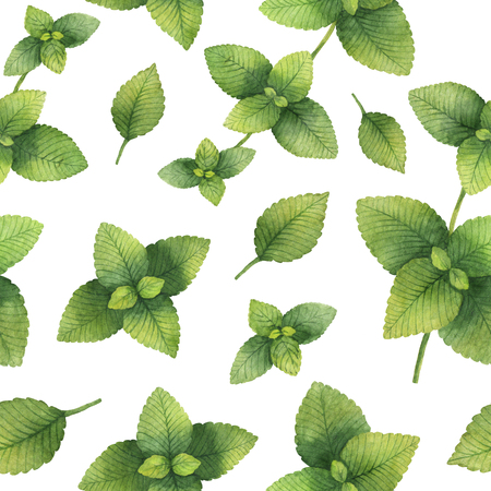 Hand drawn watercolor seamless pattern of Lemon balm.