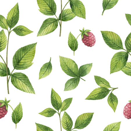 Hand drawn watercolor seamless pattern of Raspberry leaf.