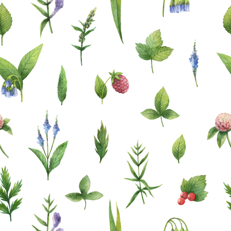 balm: Hand drawn watercolor seamless pattern of herbs and spices.