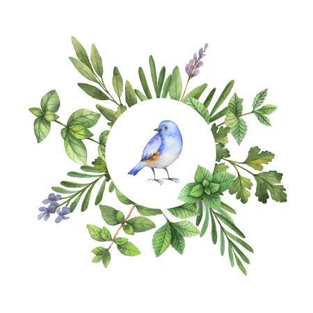Watercolor hand painted round frame with with herbs, spices and bird. The perfect design for greeting card, wedding invitation, cosmetics, natural and organic products. Stok Fotoğraf