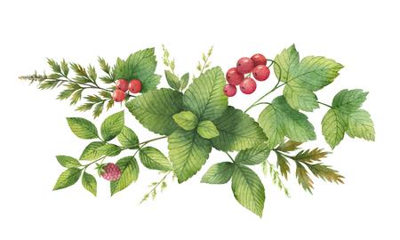 Aquarell-Bouquet mit grünen Kräutern und Gewürzen. Standard-Bild