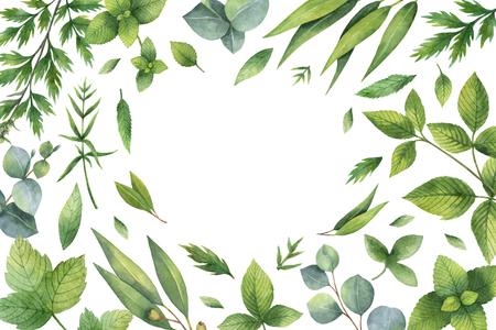 Waterverf handgeschilderde bloemen kaart met groene kruiden en specerijen. Stockfoto
