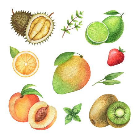 Watercolor organic set of fruits and herbs isolated on white background. Stock Photo