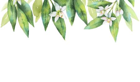 수채화 손을 분기와 꽃의 카드를 그린 과일 오렌지 흰색 배경에 고립.