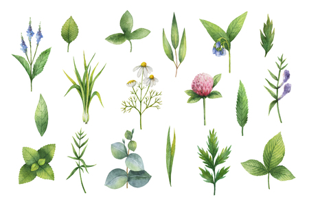 balm: Hand drawn watercolor set of herbs and spices.