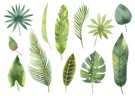 水彩画は、熱帯の葉と白い背景で隔離の枝を設定します。 写真素材