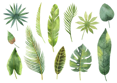 Watercolor set tropical leaves and branches isolated on white background.