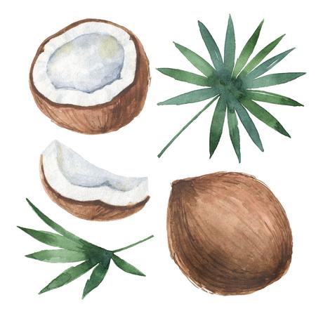 Waterverf organische reeks kokosnoot en palmen die op witte achtergrond wordt geïsoleerd.