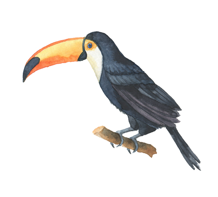 Watercolor of toucan isolated on a white background.