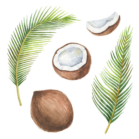 Watercolor organic set of coconut and palm trees isolated on white background. Banco de Imagens