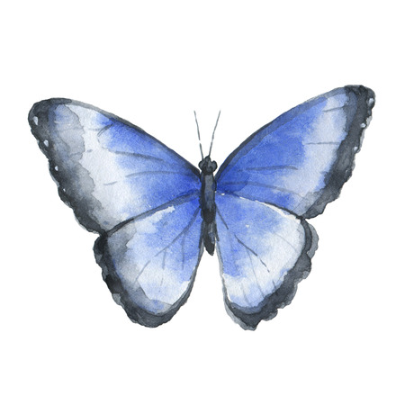 Blue watercolor butterfly isolated on white background. Stock Photo