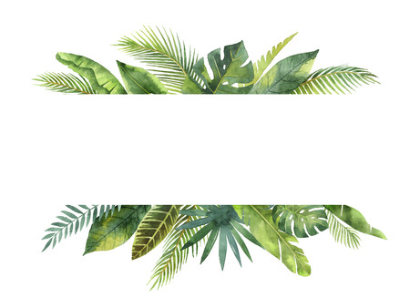 Aquarel banner tropische bladeren en takken geïsoleerd op een witte achtergrond. Stockfoto - 80733082