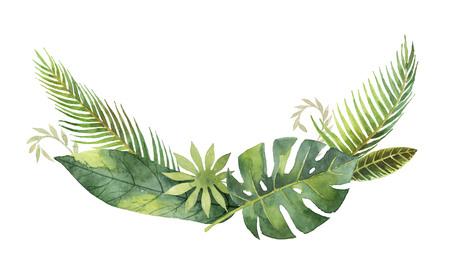 Courbe d'aquarelle feuilles tropicales et branches isolées sur fond blanc. Banque d'images - 80753309