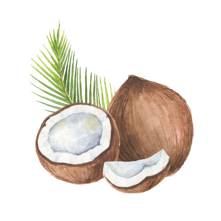 Watercolor organic composition of coconut and palm trees isolated on white background.