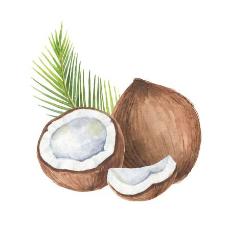 Waterverf organische samenstelling van kokosnoot en palmbomen geïsoleerd op een witte achtergrond. Stockfoto