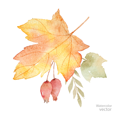 Watercolor vector autumn bouquet of leaves, branches and dogrose berries isolated on white background. Illustration