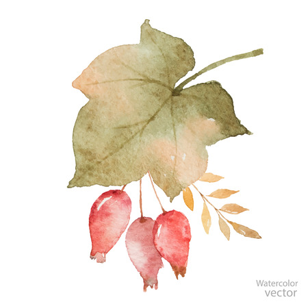 Watercolor autumn bouquet of leaves, branches and dogrose berries isolated on white .