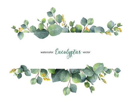 Watercolor vector hand painted green floral banner with silver dollar eucalyptus isolated on white background. Healing Herbs for cards, wedding invitation, posters, save the date or greeting design.
