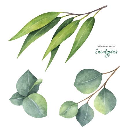 수채화 벡터 손을 유칼립투스 잎과 나뭇 가지로 설정합니다. 꽃 그림 흰색 배경에 고립입니다.