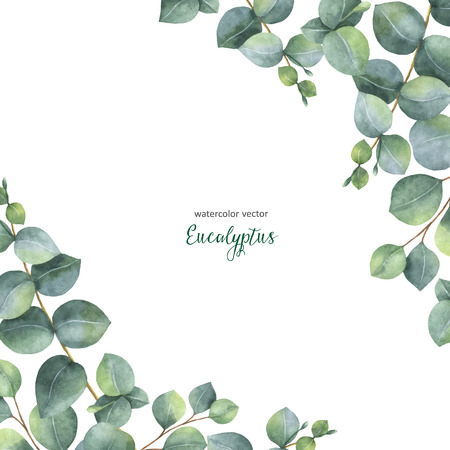 Watercolor vector green floral card with silver dollar eucalyptus leaves and branches isolated on white background. Фото со стока
