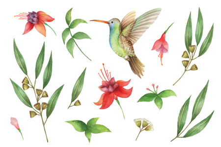 Watercolor vector hand painted set with eucalyptus leaves and Hummingbird. Vectores