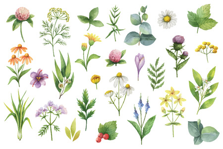 Hand drawn watercolor set of herbs and spices.
