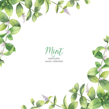 Watercolor vector frame of mint branches isolated on white background. Иллюстрация