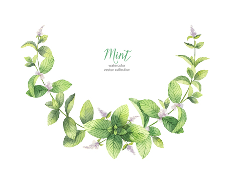 Watercolor vector wreath of mint branches isolated on white background. Stock Vector - 86260048