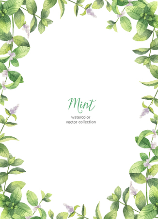 Watercolor vector frame of mint branches isolated on white background. Stock Vector - 86223616