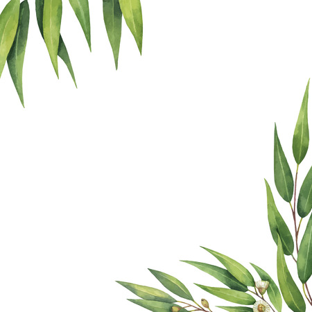 Watercolor vector green floral card with eucalyptus leaves and branches isolated on white background.