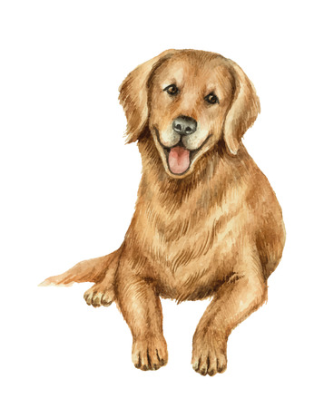 Watercolor vector retriever isolated on white background. Çizim