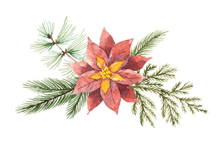 Watercolor Christmas vector bouquet with flower poinsettias and fir branches.