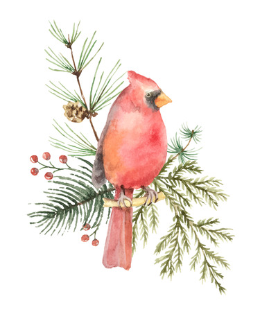 Watercolor vector Christmas bouquet with Bird Cardinal and fir branches.