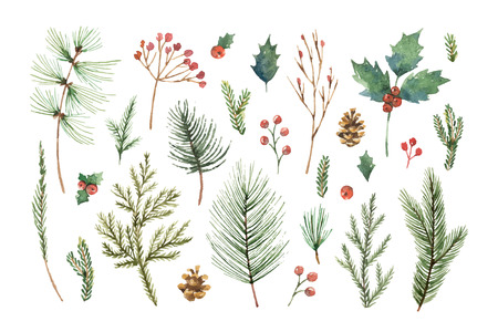 Watercolor vector Christmas set with evergreen coniferous tree branches, berries and leaves.