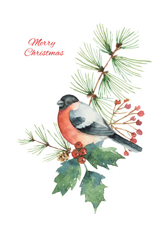 Watercolor vector Christmas bouquet with bullfinch and fir branches.