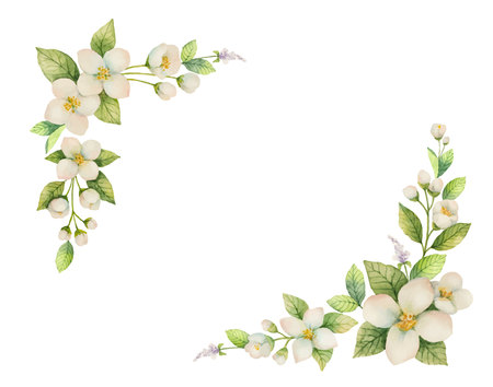 Aquarellvektorrahmen von Blumen und von Niederlassungen Jasmine lokalisiert auf einem weißen Hintergrund. Standard-Bild - 89112339