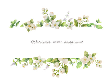 Watercolor vector banner of flowers Jasmine and mint branches isolated on white background. Illustration