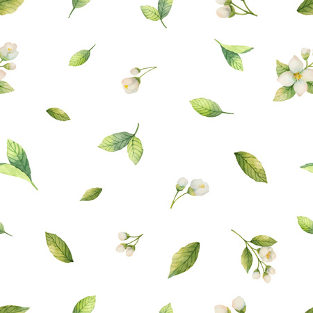 Watercolor vector seamless pattern with Jasmine flowers and mint leaves isolated on a white background. Ilustração