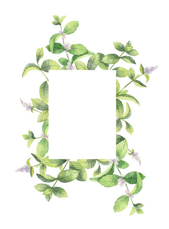 Watercolor vector frame of mint branches isolated on white background. Illustration