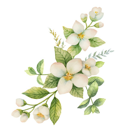 Watercolor vector wreath Jasmine and mint isolated on a white background.