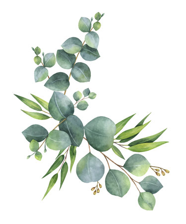 Watercolor vector wreath with green eucalyptus leaves and branches. 免版税图像