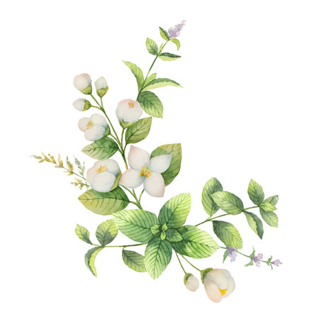 Waterverf vector krans jasmijn en mint geïsoleerd op een witte achtergrond. Bloemenillustratie voor ontwerpgroetkaarten, huwelijksuitnodigingen, natuurlijke schoonheidsmiddelen, verpakking en thee. Stockfoto - 90252672