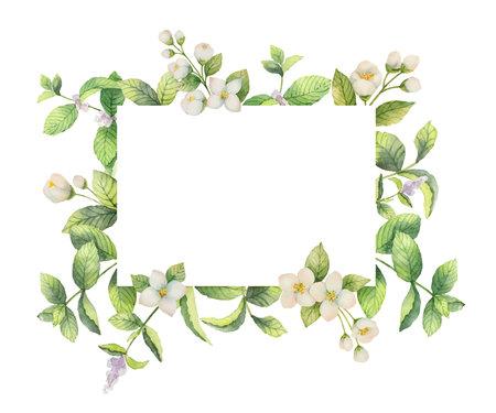 ジャスミンとミントの水彩ベクトル フレームの枝の分離の白い背景。デザインのグリーティング カード、結婚式の招待状、自然化粧品、包装、茶の