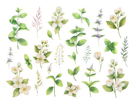 Dibujado a mano vector acuarela set verde hierbas y especias. Fondo floral para el diseño de alimentos naturales, cocina, mercado, textiles, decoraciones, tarjetas. Ilustración de vector