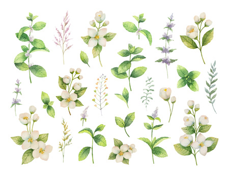 Hand gezeichnete gesetzte grüne Kräuter und Gewürze des Vektoraquarells. Blumenhintergrund für Design der Naturkost, Küche, Markt, Gewebe, Dekorationen, Karten. Vektorgrafik